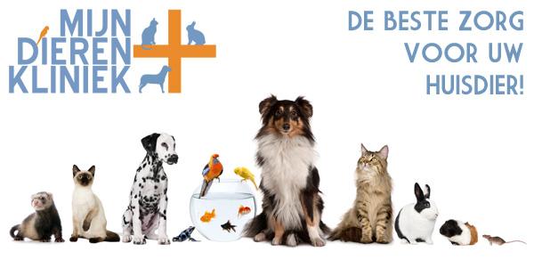 Gek op je huisdieren? Profiteer dan nu van de Bol van Voordeel aanbieding van Mijn Dierenkliniek Lisse en Hillegom: 10% korting op een consult!