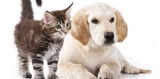 Maak van je huisdier geen asielzoeker! Laat je hond of kat chippen. Maak gebruik van de chipaanbieding van Mijn Dierenkliniek Lisse en Hillegom. Profiteer van de 33% korting!