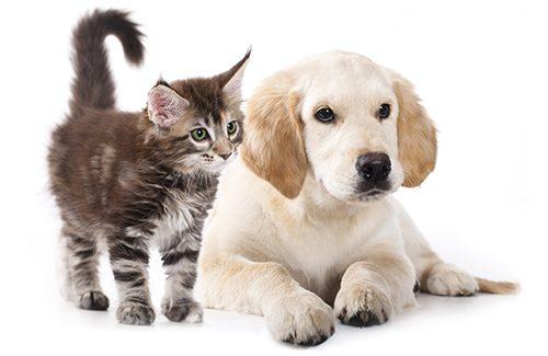 Uw huisdier met korting steriliseren of castreren bij Mijn Dierenkliniek Lisse en Hillegom