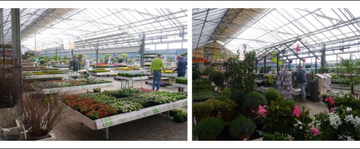Mooie Buitenplanten kopen met 15% korting en tevens genieten van een GRATIS 2e kopje koffie bij Lunchroom de Serre, dit allemaal onder 1 dak bij Tuincentrum de Mooij (Rijnsburg)
