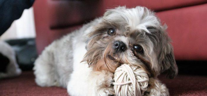 trimsalon Doggies Bol van Voordeel