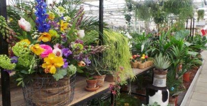 Greenhouse 25% korting op alles Bol vanVoordeel