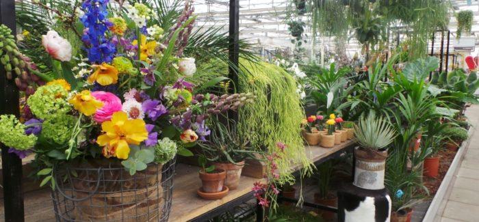 Greenhouse 15% korting op planten Bol van Voordeel