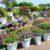 Greenhouse 30% korting potten vazen Bol van Voordeel